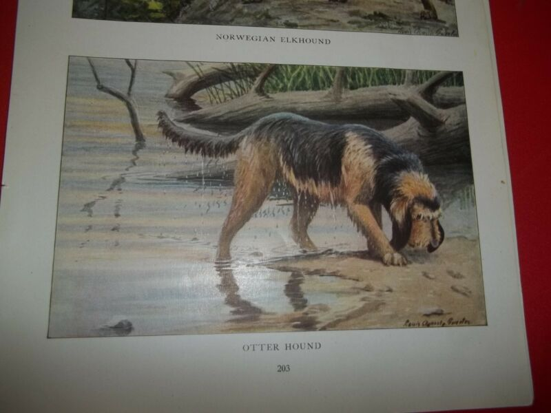 Louis A Fuertes Otterhound bookplate from 1919 National Geographic Magazine