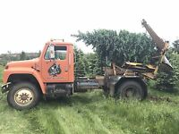 TREE TRANSPLANTING  CALL FOR DETAILS