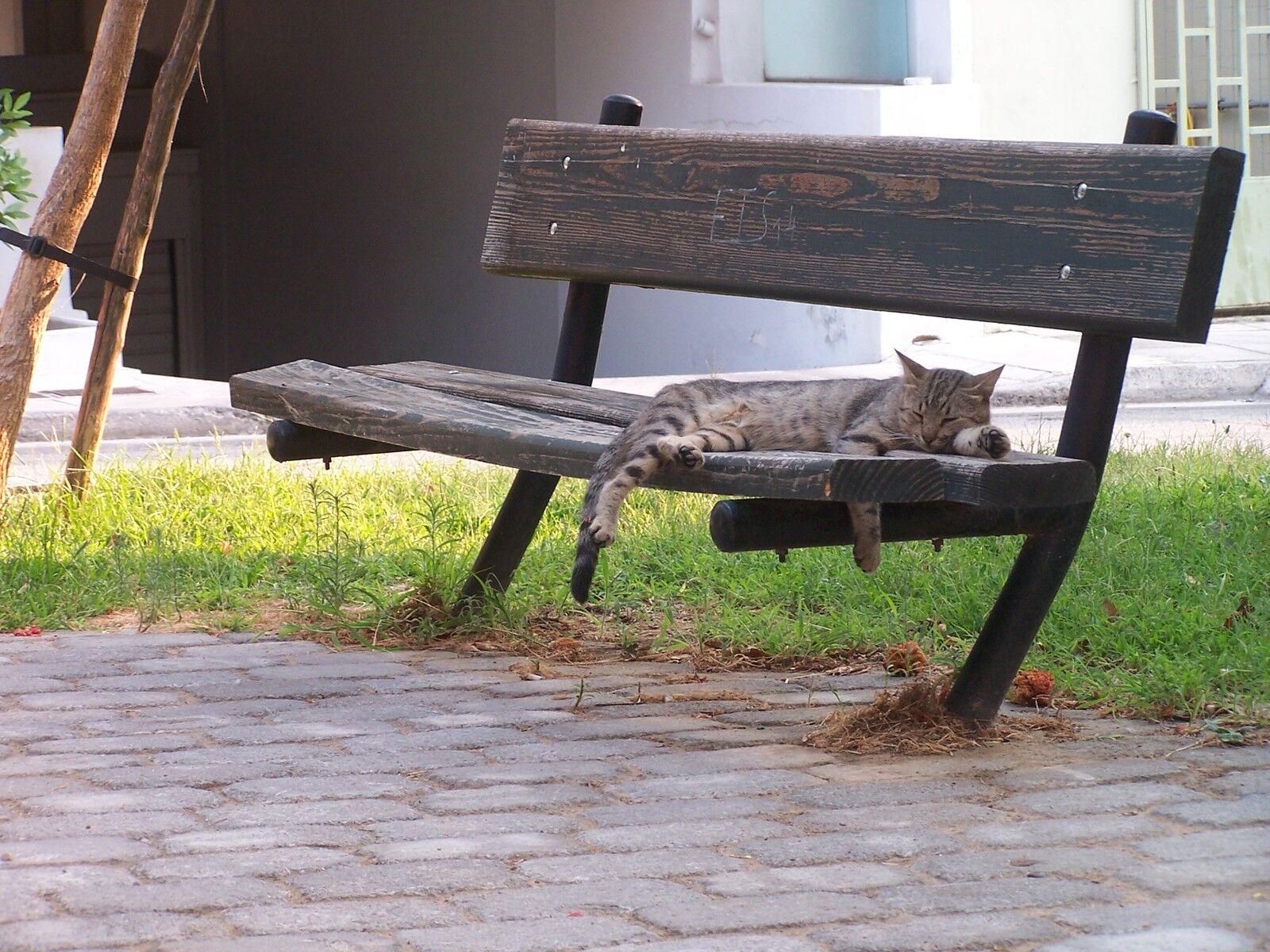 tomcat-athens