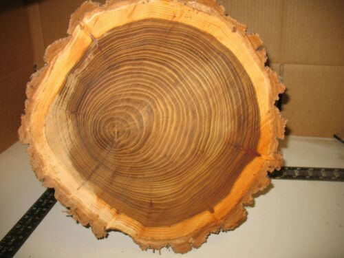 "14 - 16"" Diameter Fresh Cut Live Edge Wood Slab Slice Cookie Decor Turning Plate"