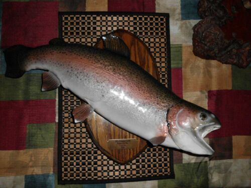 """Beautiful Taxidermy Real Skin Rainbow Trout Mount 22 1/2"""" *****"""