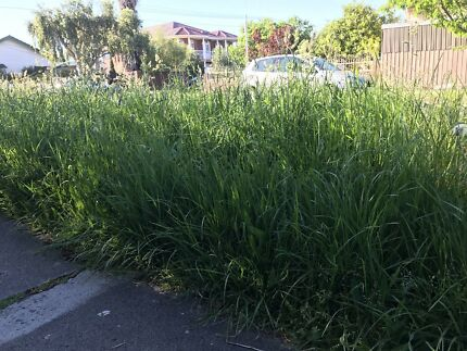 Lawn Mowing Grass Cut - Free Quick Quote