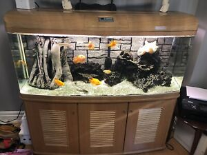 Aquarium 110 gallon Everything for sale