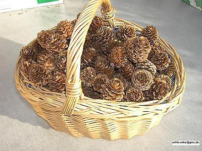 Tannenzapfen Lärchenzapfen 50 Stück Basteln Dekoration auch Zweige Advent Zapfen