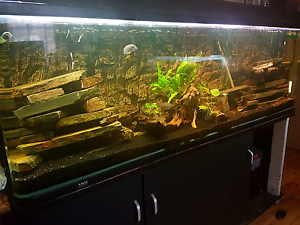 6 Foot Fish Tank Elizabeth Vale Playford Area Preview