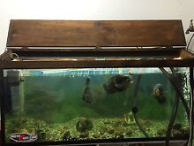 Fish tank and fish Hillville Greater Taree Area Preview