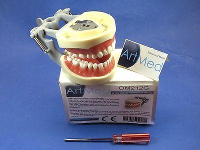 Model Typodont Dental Typodent Universal Plate Om-212g Type Kilgore Nissin