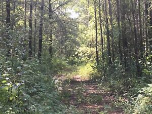 Land for sale 40 acres