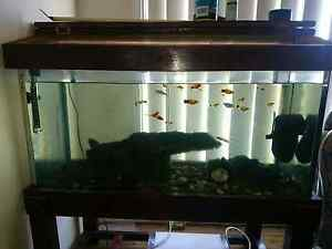 Fish tank and fish Maitland Maitland Area Preview