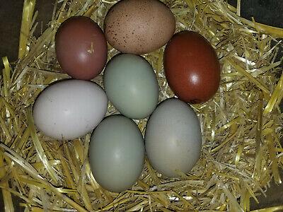 10 Hens Choice Fertile Hatching Eggs..npip Certified Ai Clean