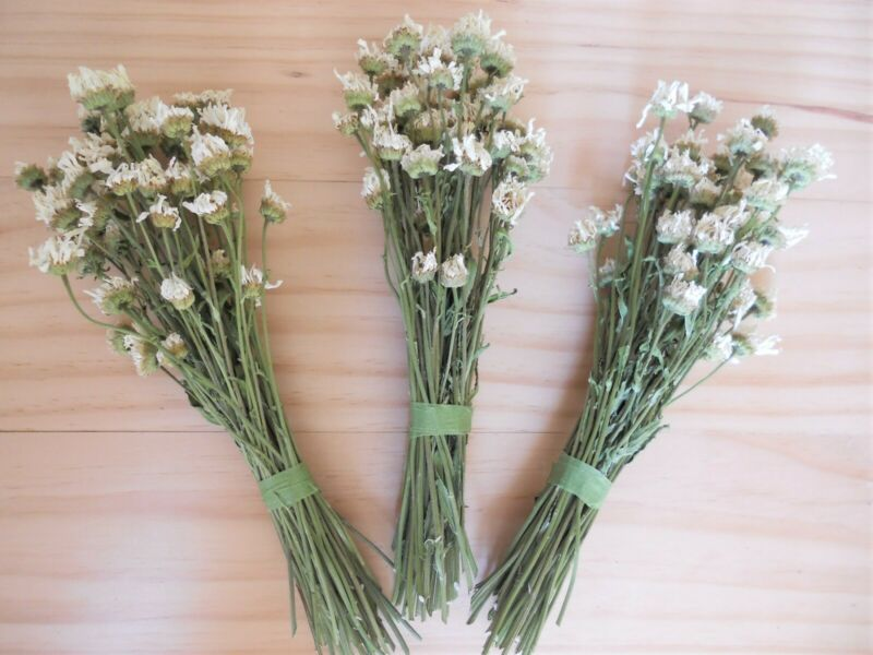 Dried Flowers - Daisies - 150 Total Stems - 3 Bunches