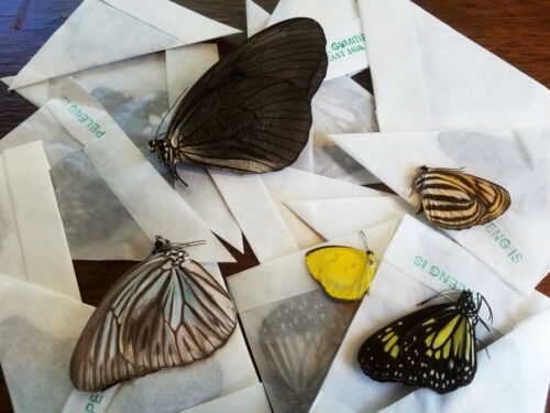 REAL Mixed lot of 10 Indonesian Butterflies, Ships from USA! Colorful! Art! A1