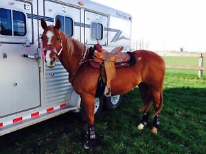 AQHA mare for sale to trail riding home