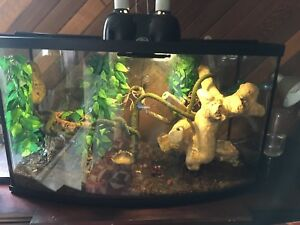 Crested Geckos and tank