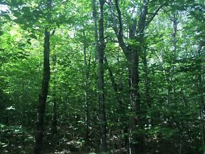 Land for sale in cottage country Labelle