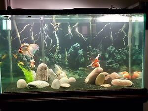 100 gallon aquarium with solid wooden stand and canopy.
