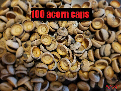 100 acorn caps - real natural - from red oak