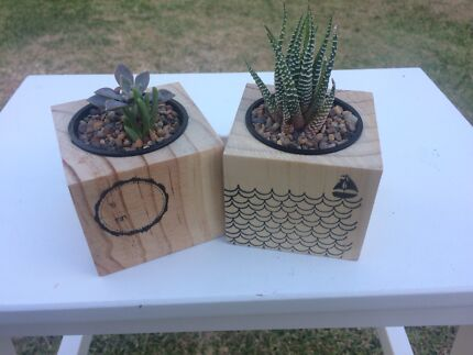 Succulent easter gifts plants gumtree australia campbelltown succulent gifts negle Gallery