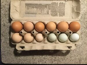 Fertilized hatching eggs $20.00/dozen
