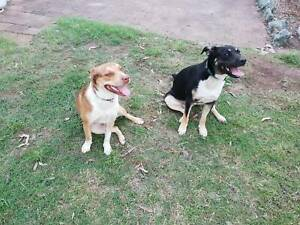 2 Happy, healthy dogs looking for a new home