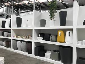 24hrs ONLY! Everything must go! 500+ Large outdoor and Small pots Taren Point Sutherland Area Preview