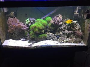 50 gallon reef