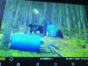 Spring Bear Hunt!