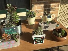 ** Mothers Day Succulents ** Werrington Downs Penrith Area Preview