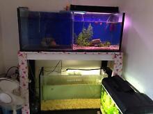 FS: Fish rack, lights, filter + pump, heaters, air pump Marrickville Marrickville Area Preview