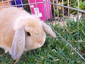 Small animal pet-sitting Warnbro Rockingham Area Preview