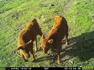 cattle or hunting? lovely 230 acres for sale close to canberra Michelago Cooma-Monaro Area Preview