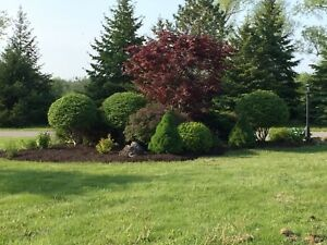 Modest Landscaping Services