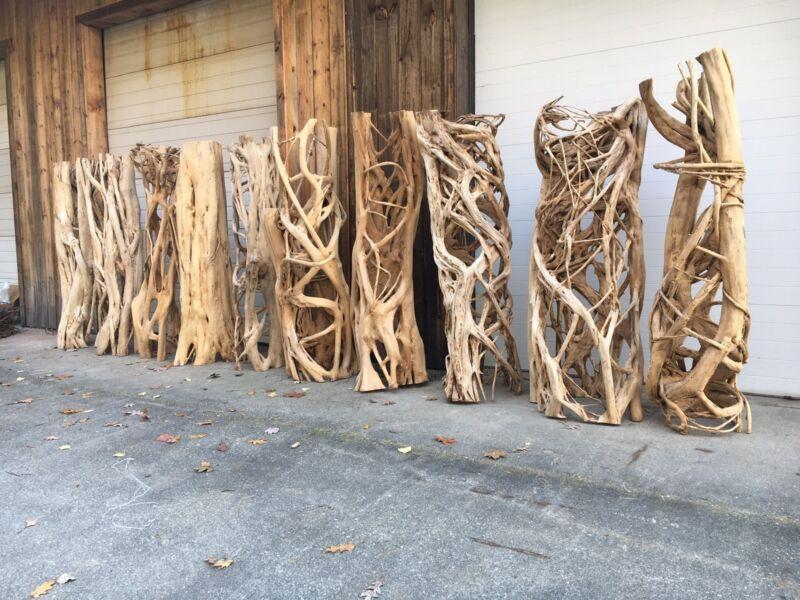 Strangler Fig Skeleton Rare Exotic Natural Wood Decor Sculpture