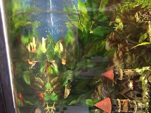 Guppies - females.  Only 4 months old