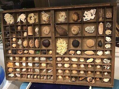 Vintage Antique Printer Type Set Drawer Art Beach Shell Collectible Wood