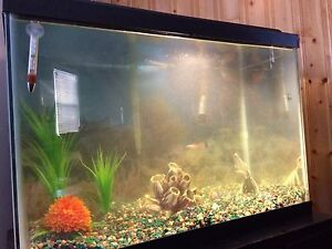 20 Gallon Aquarium - all accessories and fish included