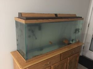 55 gallon Fish tank and accessories