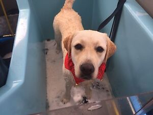 Business for sale Aussie Pooch Mobile hydrobath dog wash Arana Hills Brisbane North West Preview