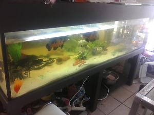 6ft fish tank Marsden Logan Area Preview