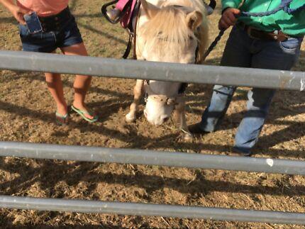 Horse holding yard