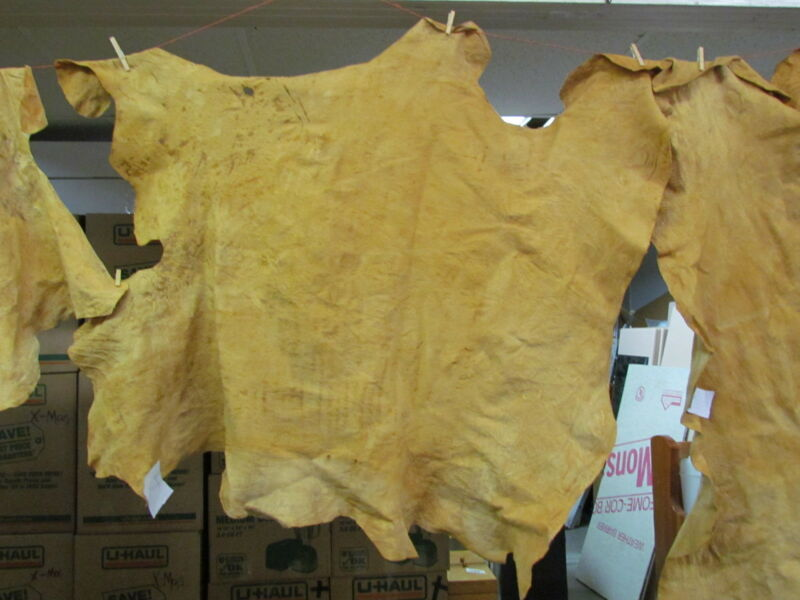 "NATIVE AMERICAN LIGHT COLORED HOME TANNED MOOSE HIDE 52"" X 49"" IRREGULAR SHAPED"