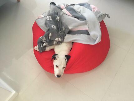 Puppy: Bonnie needs a home!
