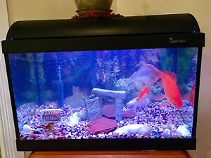 Aquarium 20 gallons with two large fishes and accessories