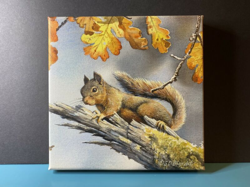 Susan Bourdet Squirrel Nut Case Wrapped Canvas 10.5 by 10.5 inches New Adorable