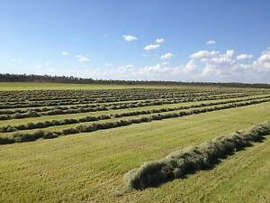HAY & SILAGE FOR SALE Kirwan Townsville Surrounds Preview