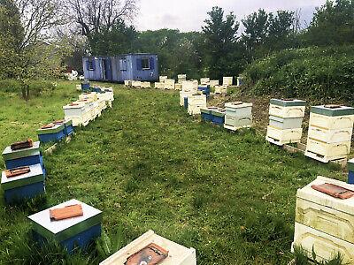 Neuc of honey bees