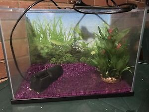 Fish tank Nambour Maroochydore Area Preview