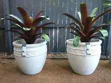 Selling All New Pots - Going Cheap ALL NEGOTIABLE Wavell Heights Brisbane North East Preview