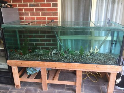 6ft fish tank, 14 fish and new filter