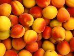 Gingham&Peach